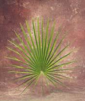 Palm - Mediterranean