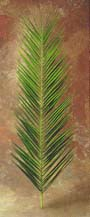 Palm - Date